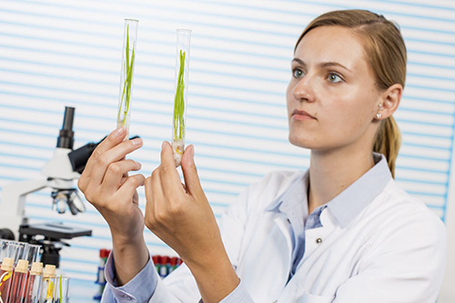 scientist with crops