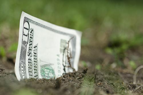 money growing int he ground