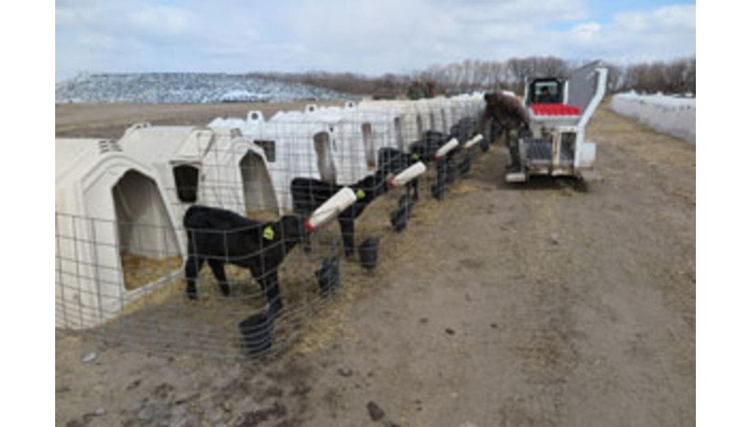 HerdFlex-Calves.jpg-pic