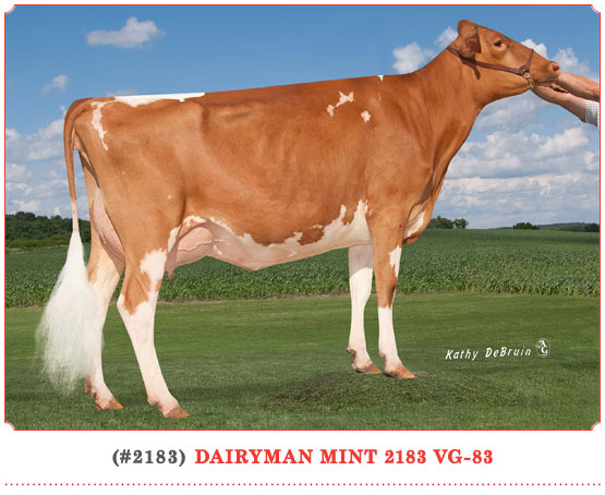 Dairyman Mint 2183