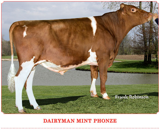 Dairyman Mint Phonze