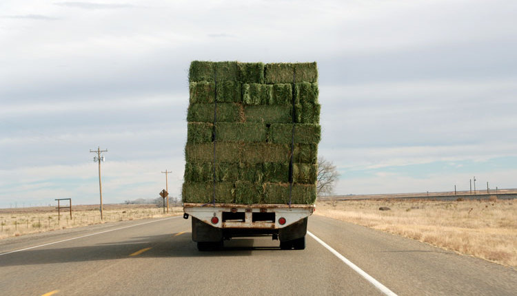 load-of-hay