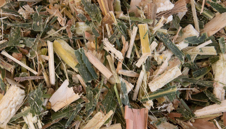 silage_ph1